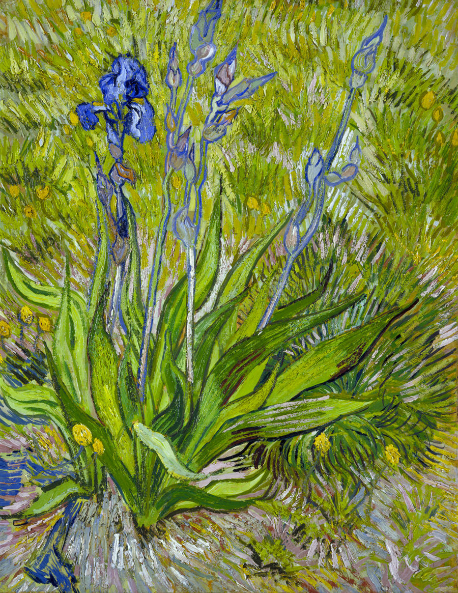 Deborah feller artist deborahfeller iris 1889 oil on thinned cardboard mounted on canvas 24 x 19 622 x 483 cm national gallery of canada ottawa reviewsmspy